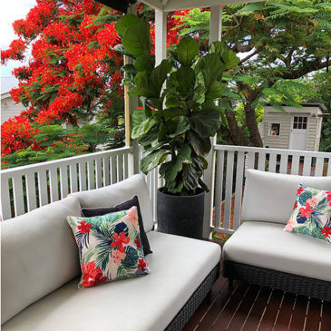 POP-OF-COLOUR-toowong-house-gallery-5